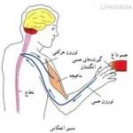 hamahangi&ertebat badan