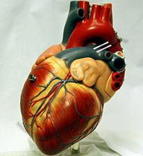 رونگاره و شمای قلب